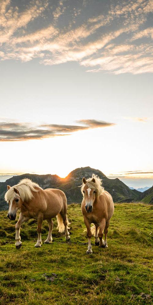 Wandbild Pferde Sonnenuntergang