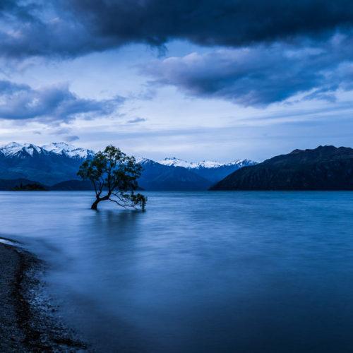 Wandbild Wanaka Tree sea